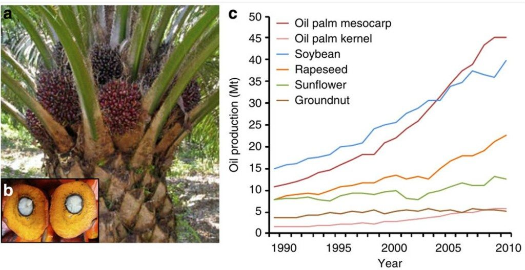 Palm oil market