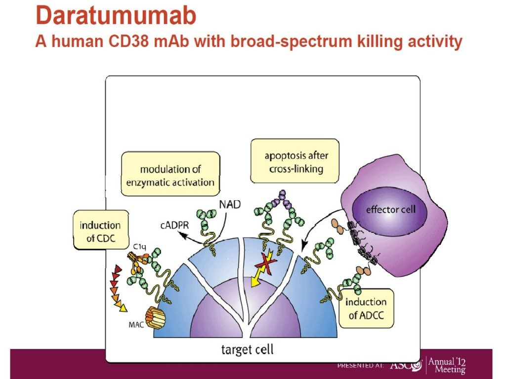 Daratumumab mechanism