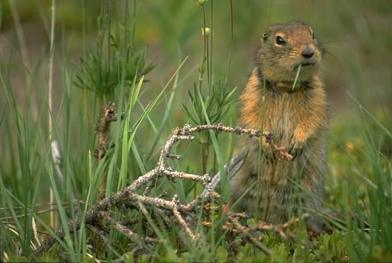 agsquirrel
