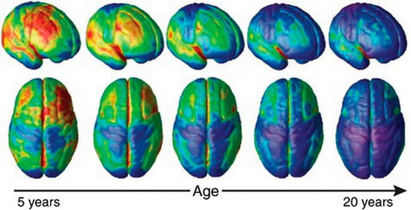 what is the impact of brain maturation on emotional development The findings are of particular concern because adolescence is a crucial period for brain development and maturation, the researchers note.